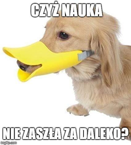 """Skąd ta pseudonauka? """"To tylko teoria"""" gościnnie w donald.pl"""