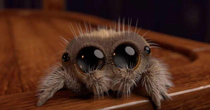 Mosina: ktoś porzucił w lesie pojemniki z pająkami ptasznikami, zostawił nawet ich nazwy